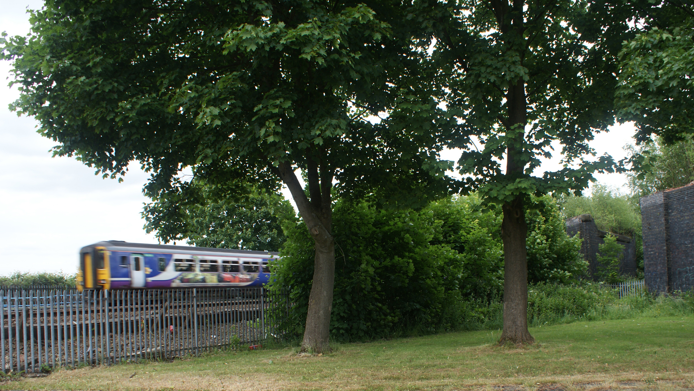 Trees and train